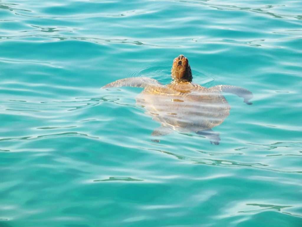 Kekova'da Deniz Kaplumbağaları