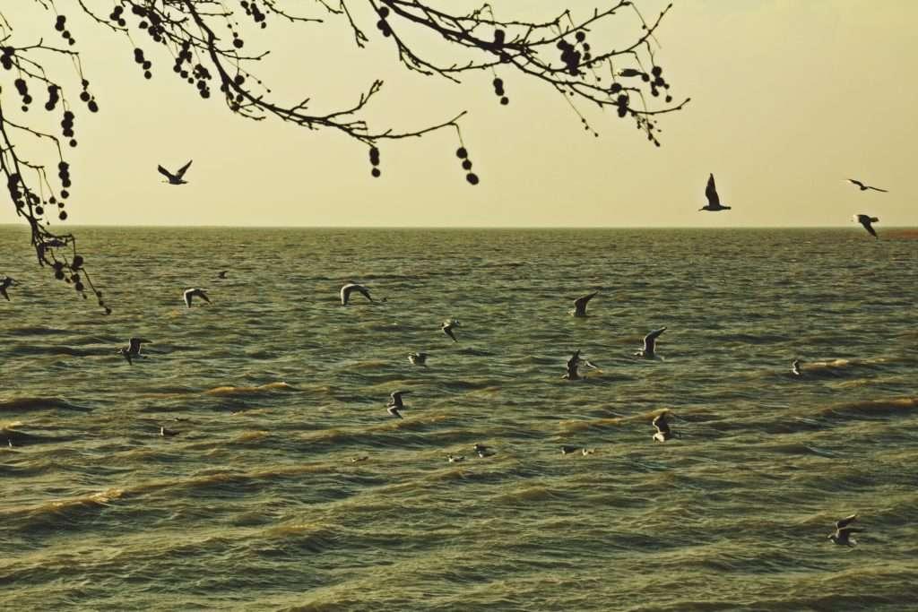 Beyşehir Gölü'nde Kuşlar