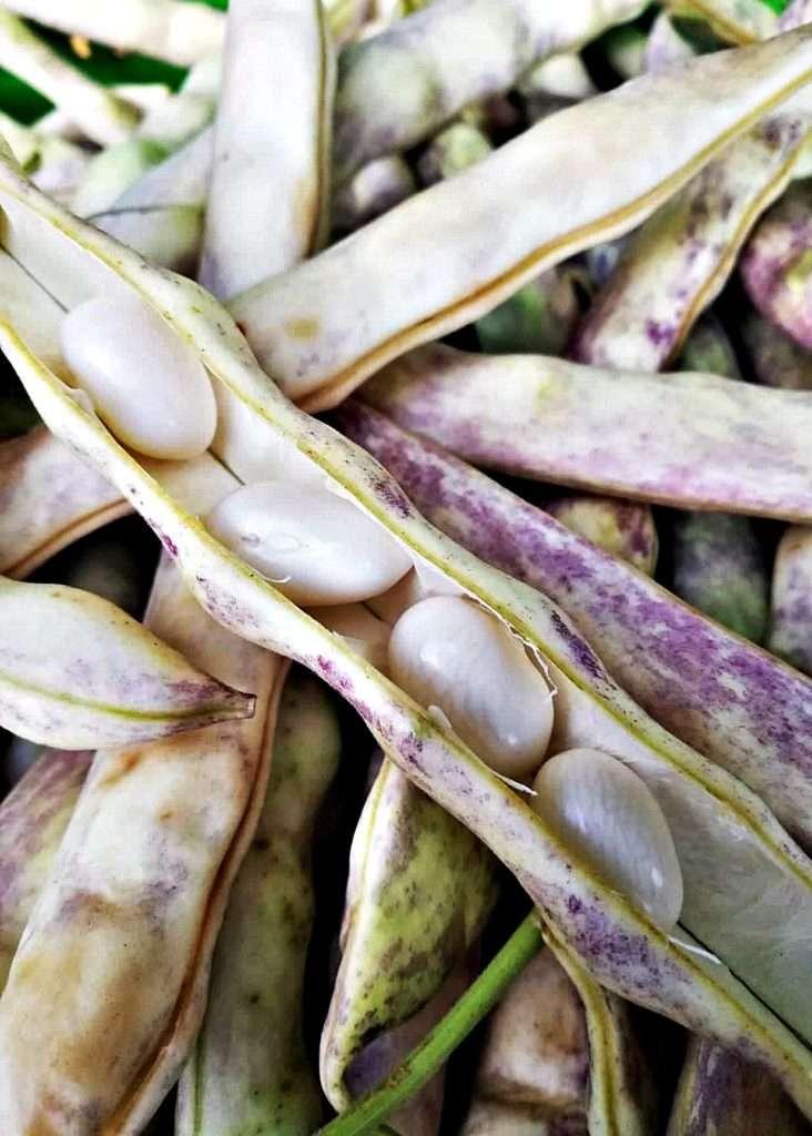 Nebiyan Doğa Festivali Nebiyan Şeker Fasulyesi - Nebiyan'ın Meşhurları