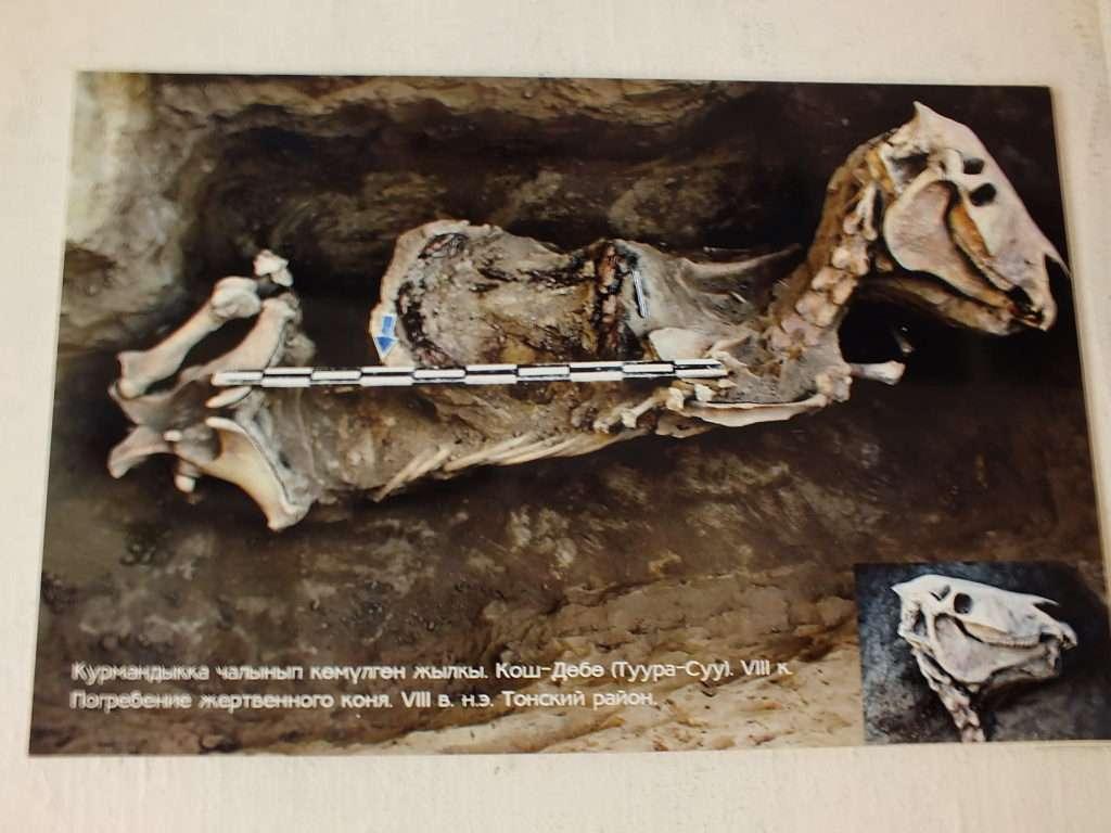 Issık Gölü Çevresindeki Bulunan Bir Fosil Kalıntısı