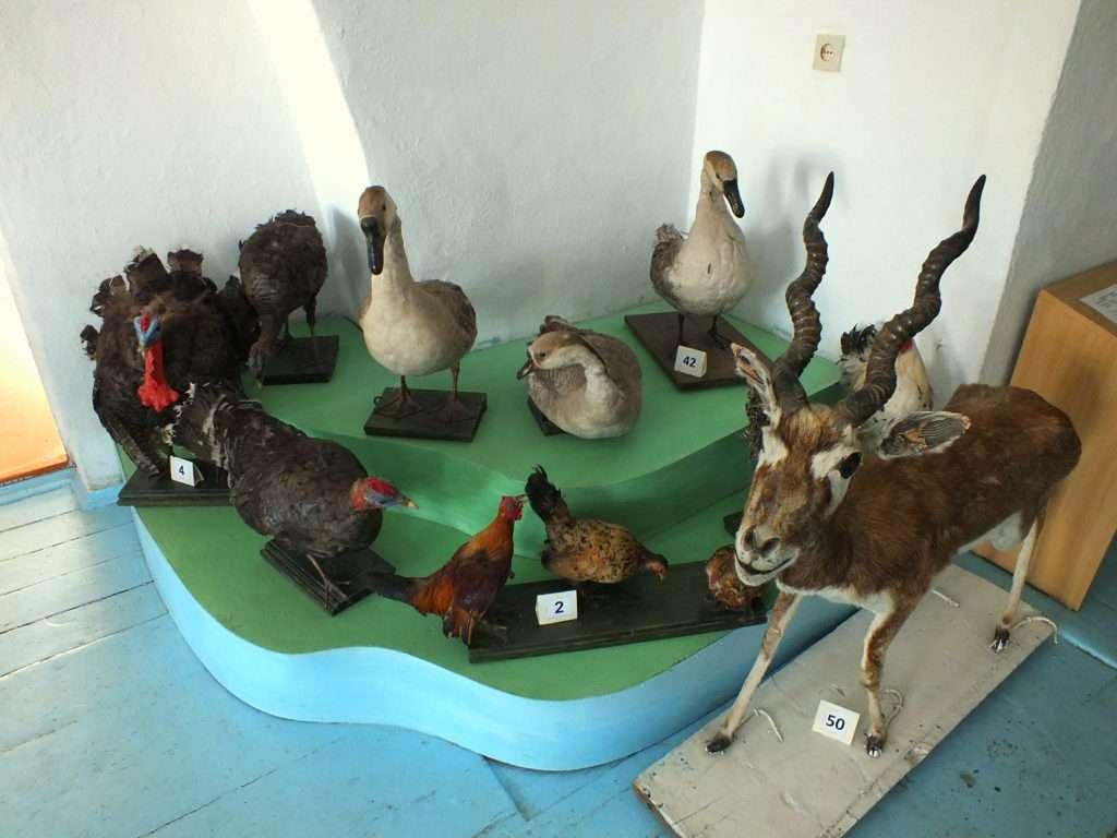 Doldurulmuş Hayvanlar