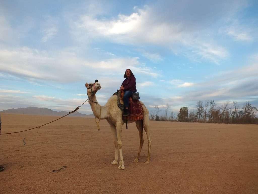 Sina Çölü'nde Deve Sürüşü