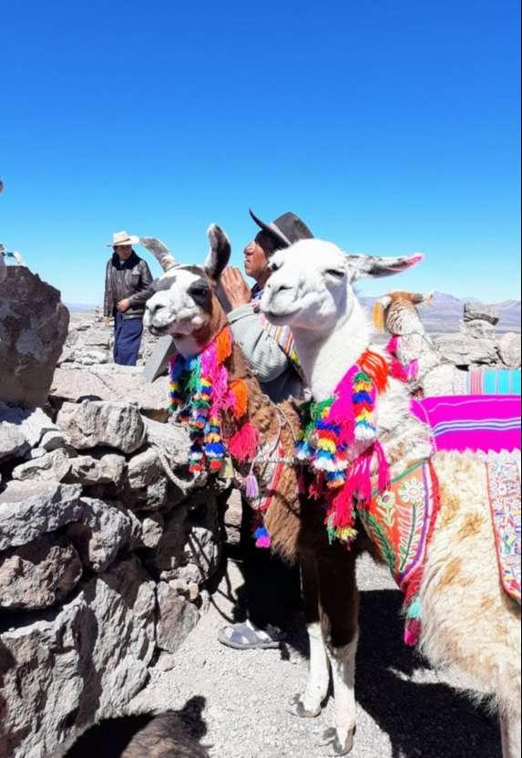 Pastor con sus guanacos en Patapampa