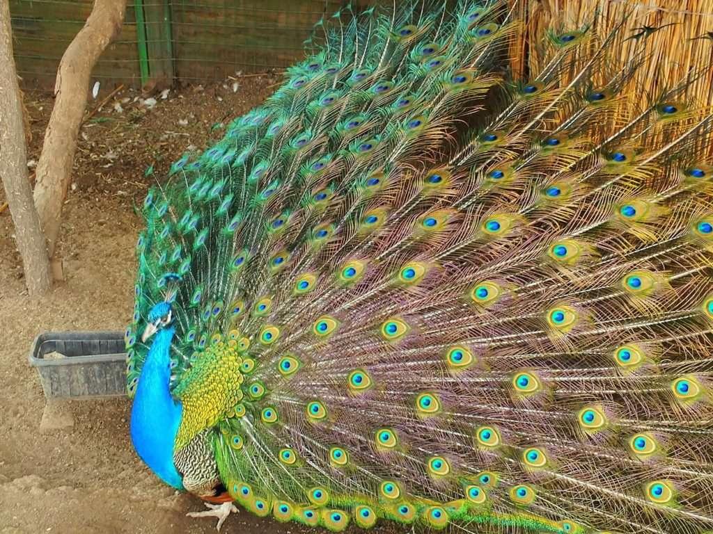 Kok Tobe Parkı Hayvanat Bahçesi