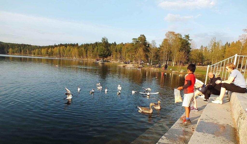 Oslo Gezisi Sognsvann Gölü ve Çocuklar