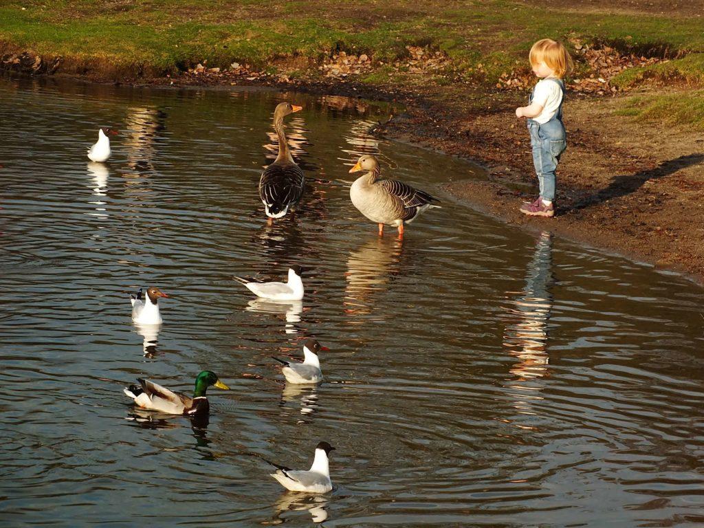 Çocuklar ve Ördekler