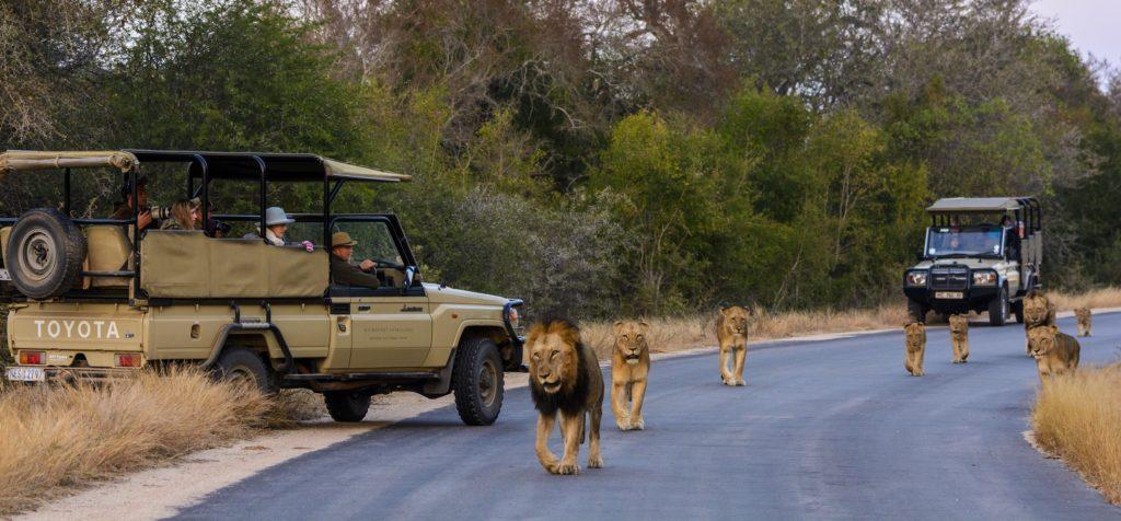 Kruger National Park'ında İnanılmaz Bir An