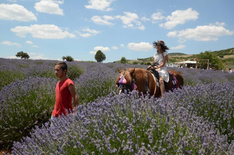 Lavanta Tarlasında At Sürüşü