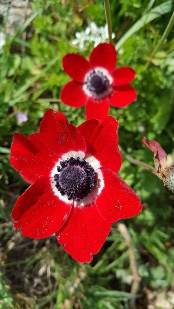 Babadağ'da Bir Çiçek